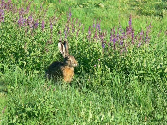 Watership Down, Hampshire
