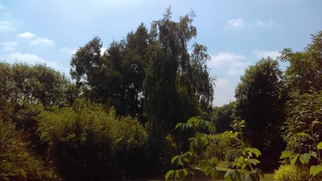 A Feast For The Senses: The National Herb Centre, Warwickshire - Nature Walk