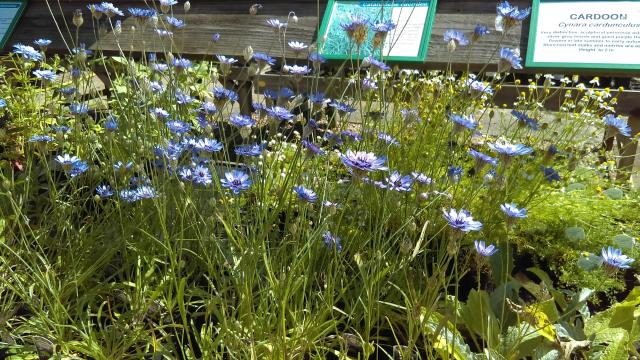 A Feast For The Senses: The National Herb Centre, Warwickshire - Plant Sales