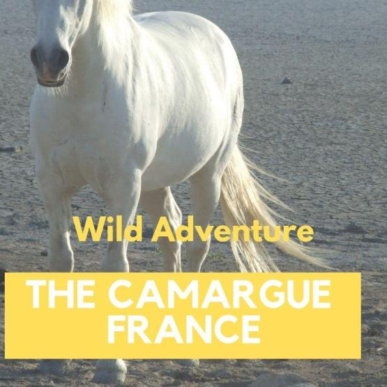 Wild Adventures in The Camargue, South of France