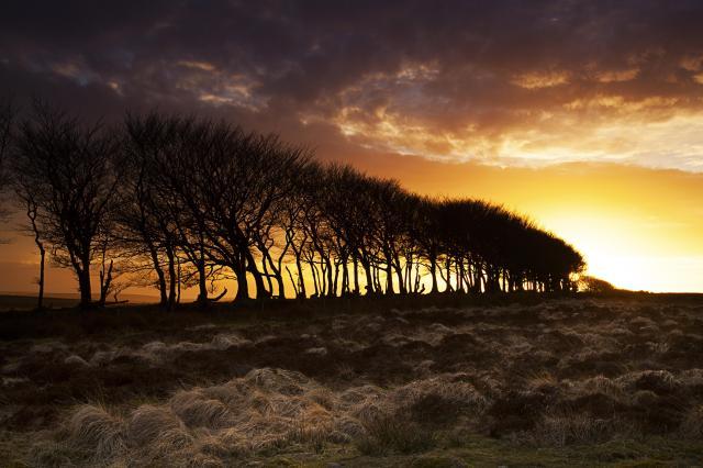 Stargazing UK - Where To See The Best Night Skies - treeline