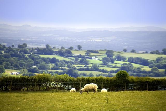 Discovering Herefordshire's Hidden Black And White Villages - Offa's Dyke Walk, Hergest Ridge, Herefordshire