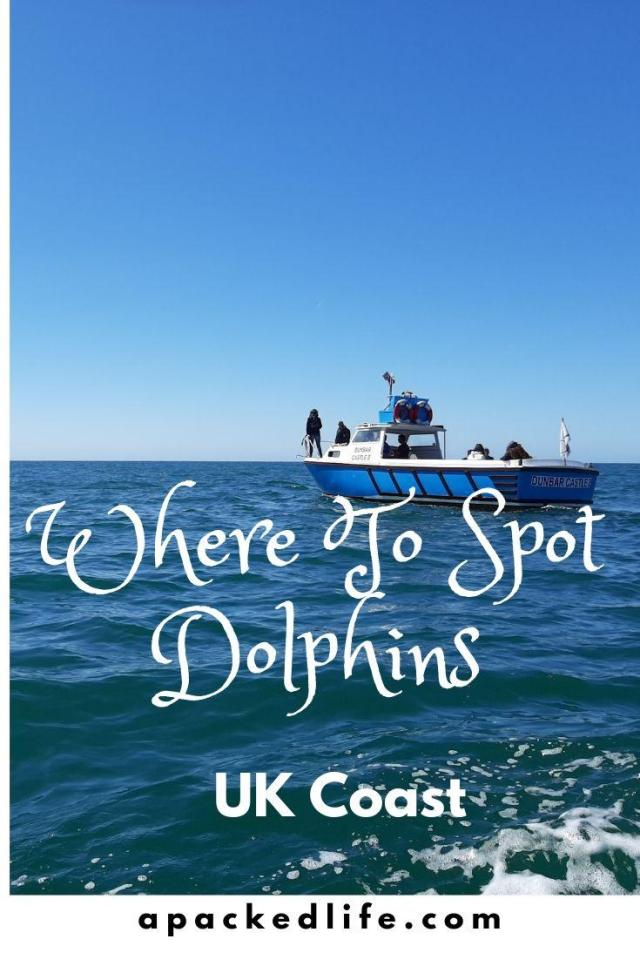 Where to spot dolphins UK