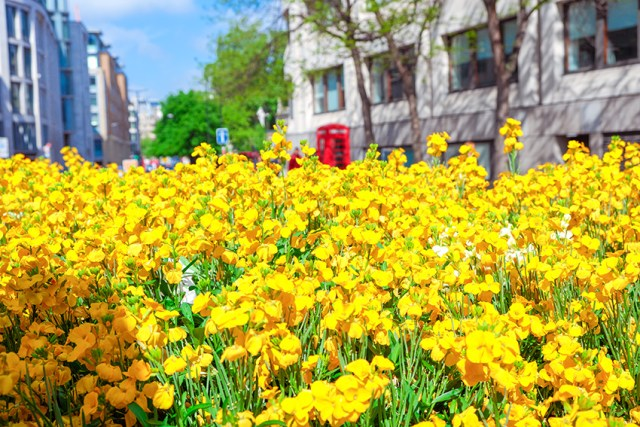 Best Time To Visit The UK - Spring - London Traveling Dany