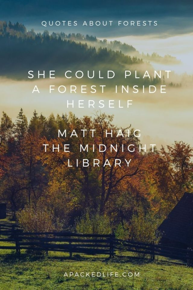 Quotes about forests - Matt Haig