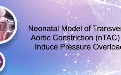 WEBINAR: Neonatal model of transverse aortic constriction (nTAC) to induce pressure overload