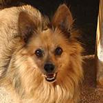 Foto de un perro pequeño