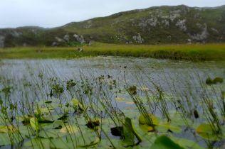 Slacking through the reeds