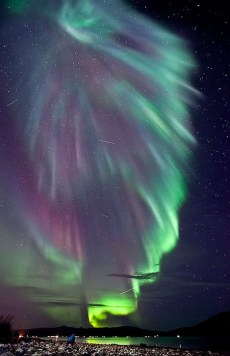 a Superb Aurora pic