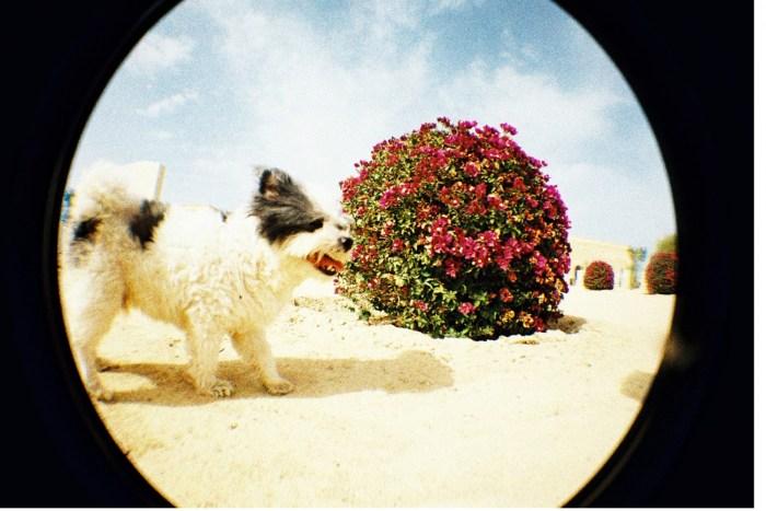 Kompakt Fisheye - analogowy aparat lomo rybie oko na film 35mm od Lomography - zdjęcie Przykładowe zdjęcia do uzyskania z aparatu Lomography Fisheye One czerwony