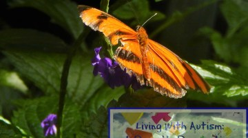 Discover the Beautiful Niagara Parks Butterfly Conservatory #FamilyTravel