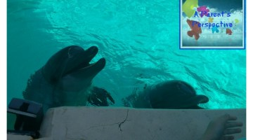 MarineLand Has Fun For Everyone