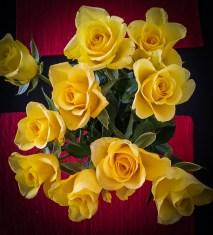 Rosas amarelas do namorado.