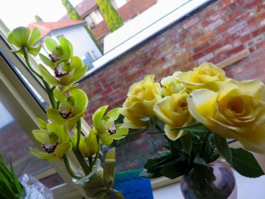 Orquídeas mágicas da Nina amada!