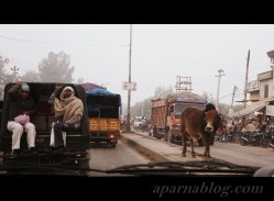 Legendary cow in the middle of the road :)