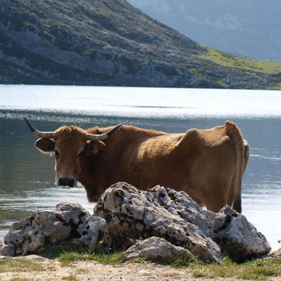 Covadonga, Asturias