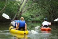 Mangroove Kayak Tour 1