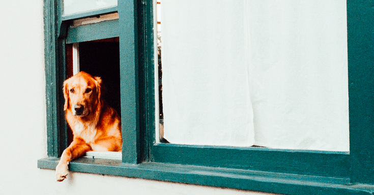 Tips for Pet Owners in Apartments