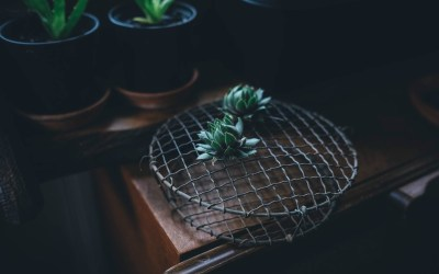 What You Should Know About Caring For Air Plants