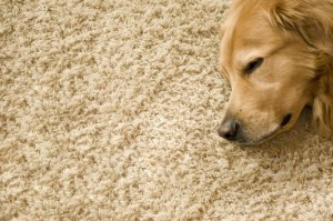 carpets,