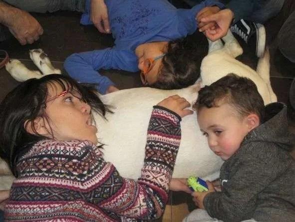 Roncescán: perros de ayuda