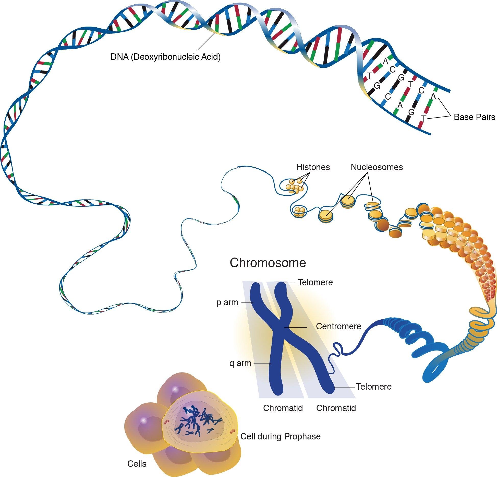 Endomembrane Organelles Ap Biology
