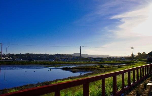 sized_marin-gateway_wetland2