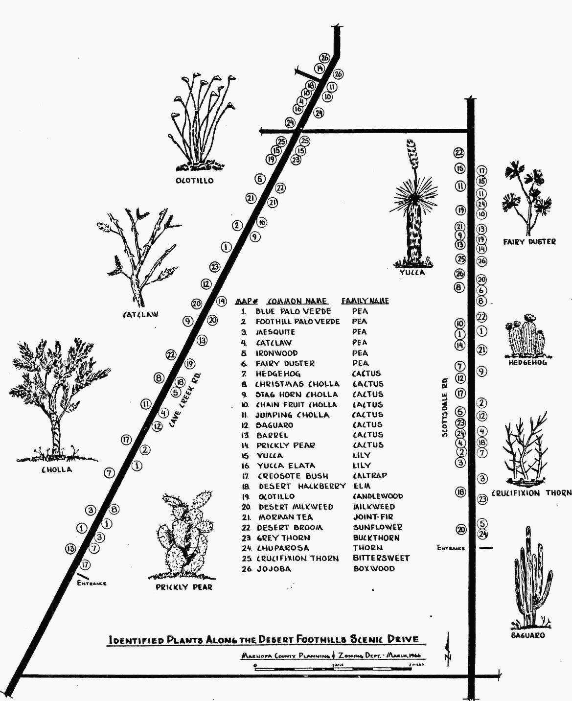 Scenic Drive Heritage Timeline