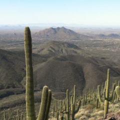 Scottsdale Man Discovered Black Mountain Treasure