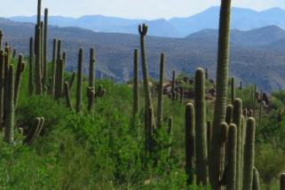 Top Environmental Blogs – Scottsdale & Sonoran Communities