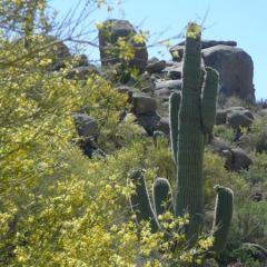 See Video, Photos & Hike Scottsdale's Jane Rau Trail