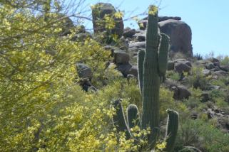 See Video, Photos & Hike Scottsdale's Jane Rau Trail