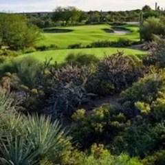 Desert Forest Golf Course, A Desert Classic