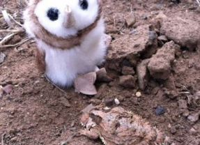 For The Love Of An Owl & Photo Tribute to Wild At Heart