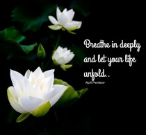 Breathe in deeply and let your life unfold, as a Lotus flower unfolds drinking in the sunlight.. Allow your Spiritual nature to take you to where you are meant to be. You can trust that part of yourself, always.. -April Peerless-