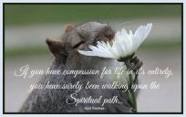 If you have compassion for life in it's entirety, you have surely been walking upon the Spiritual path. ~April Peerless2014