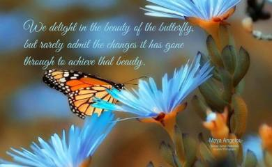 We delight in the beauty of the butterfly, but rarely admit the changes it has gone through to achieve that beauty.. ~Maya Angelou .