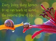 Every living thing known to us while we are here can teach us about the natural flow of life.All we need to do is pay attention. ~A.Peerless