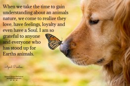 When we take the time to gain understanding about an animals nature, we come to realize they love, have feelings, loyalty and even have a Soul. I am so grateful to anyone and everyone who has stood up for Earths animals. April Peerless