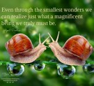 Even through the smallest wonders..