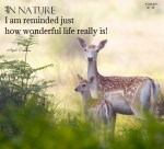 In nature I am reminded just how wonderful life really is! April Peerless