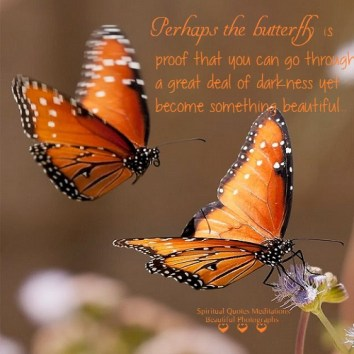 Perhaps the butterfly is proof that you can go through a great deal of darkness yet become something beautiful.. Unknown Author