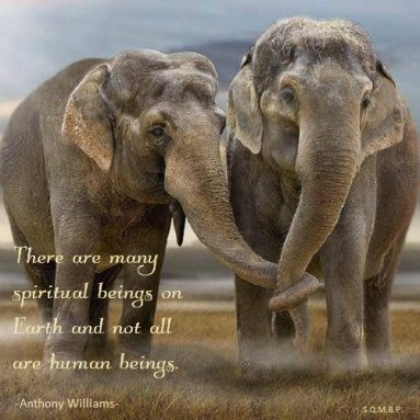 There are many spiritual beings on Earth and not all are human beings. Anthony Williams