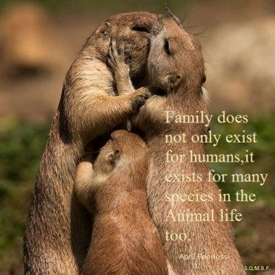 Family does not only exist for humans. It exist for many species in the animal life. A.Peerless