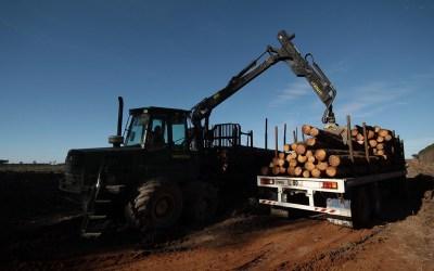 Seminario de exportaciones forestoindustriales