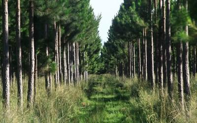 Alientan la adhesión provincial a la ley nacional de inversiones forestales
