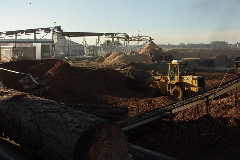 La articulación privada se fortalece como estrategia de desarrollo del sector maderero