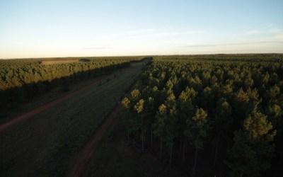 Presentan el Plan Estratégico Forestal y Forestoindustrial 2020-2030