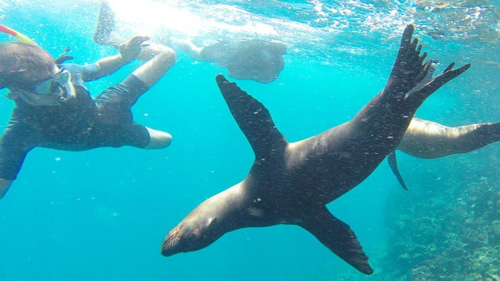 Baby Sea Lions and Their Playfulness in Espanola Island
