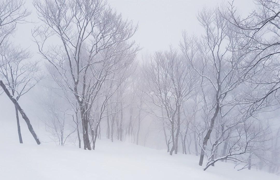 hakuba valley powder snow